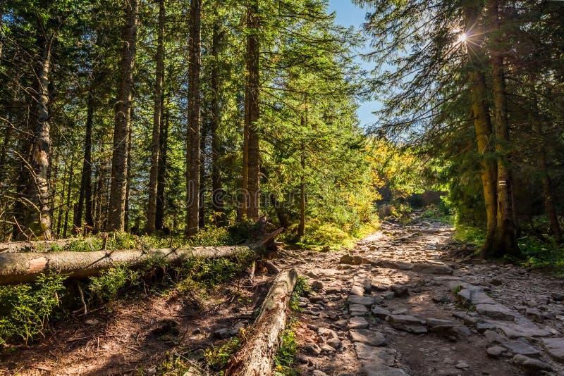 Bunter Wald in Tatra-Bergen bei Sonnenaufgang im Herbst stockfoto