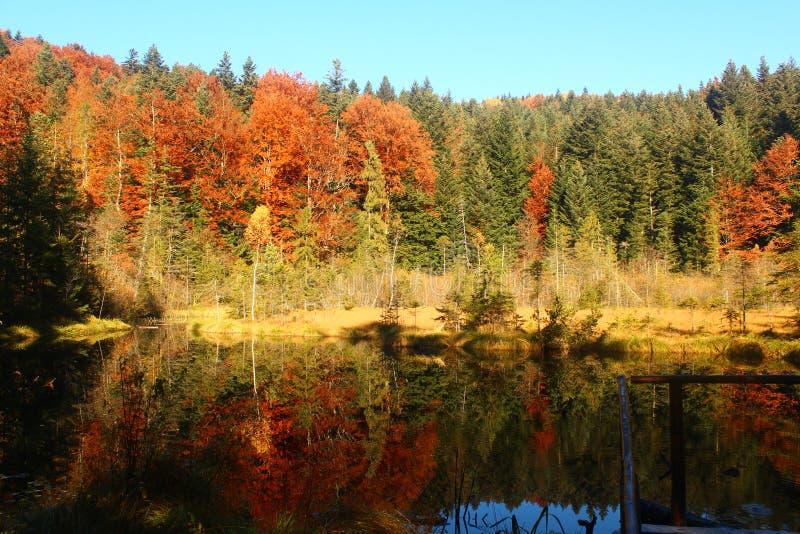 Bunter Wald und ein See in den Karpaten lizenzfreie stockfotografie