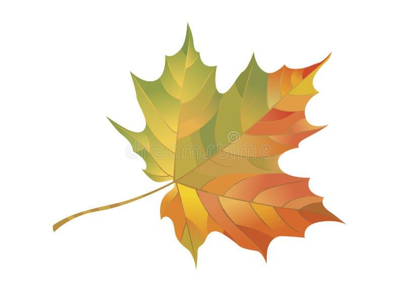 Buntes Ahornblatt lokalisiert auf einem weißen Hintergrund Herbstelement für Ihr Design Auch im corel abgehobenen Betrag lizenzfreie abbildung