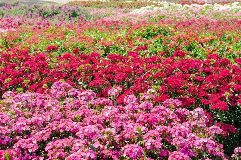 Buntes blühendes Blumenbeet stockfoto