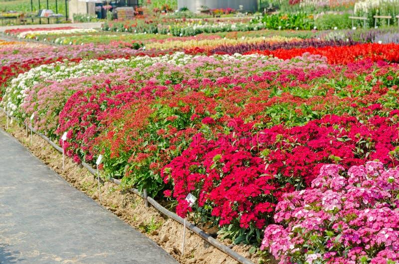 Buntes blühendes Blumenbeet lizenzfreie stockbilder