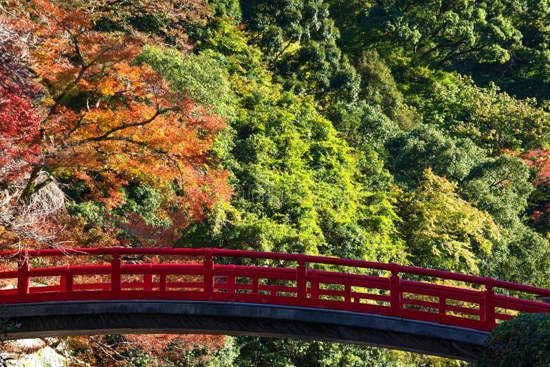 Buntes Blatt und rote Brücke im Herbst bei Japan lizenzfreie stockfotografie