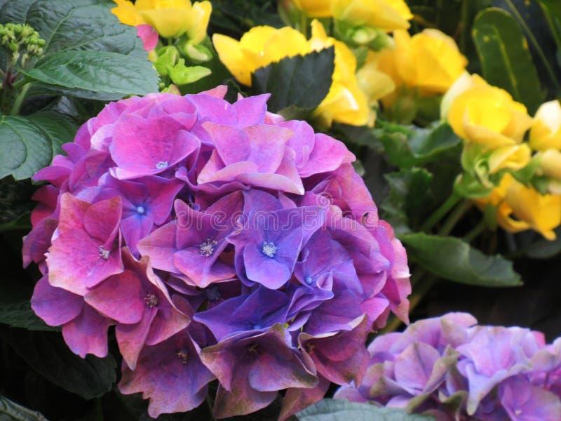 Buntes Blumen-Blühen schön stockbild