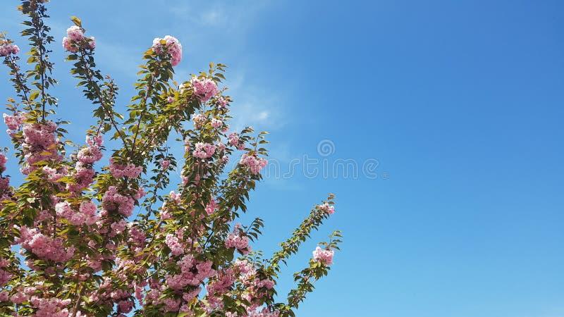 buntes Blumenanlagenbaum-Parkgartenschönheitssommer-Inspirationsdesign lizenzfreie stockfotos