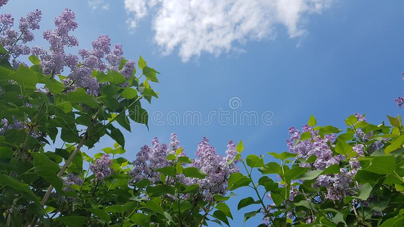 buntes Blumenanlagenbaum-Parkschönheitssommer-Inspirationsdesign stockbild