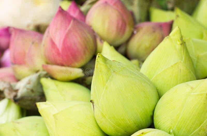 Buntes Blumenblatt gefalteter Lotos stockbild