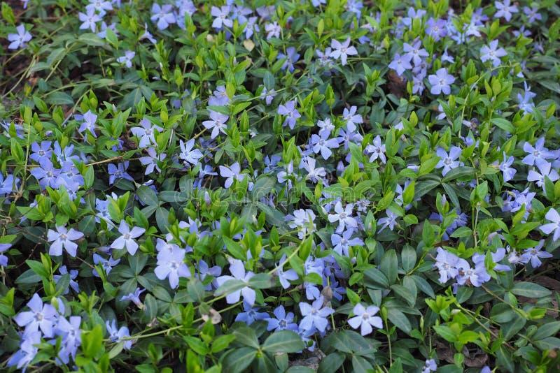 buntes Blumengrenzgartenschönheitssommer-Inspirationsdesign lizenzfreie stockbilder
