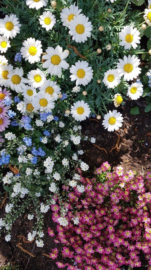 buntes Blumengrenzgartenschönheitssommer-Inspirationsdesign lizenzfreie stockfotos