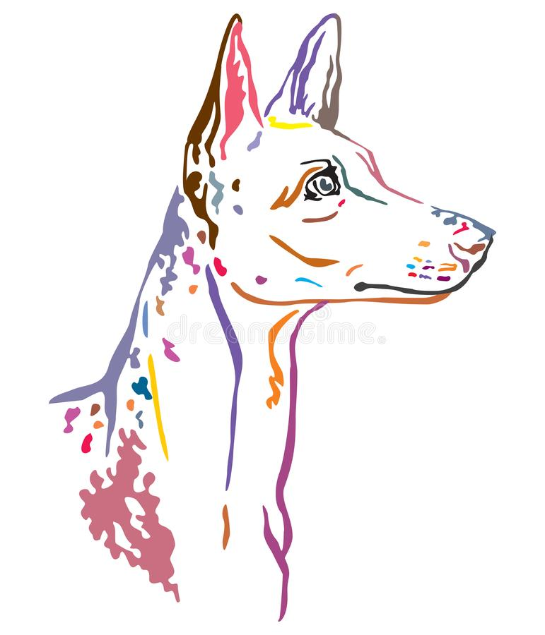 Buntes dekoratives Porträt der Ibizan-Jagdhund-Vektorillustration stock abbildung