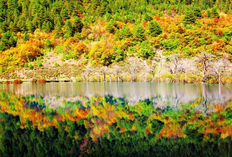 Buntes Fallholz reflektiert im See Schöne Landschaft stockbilder