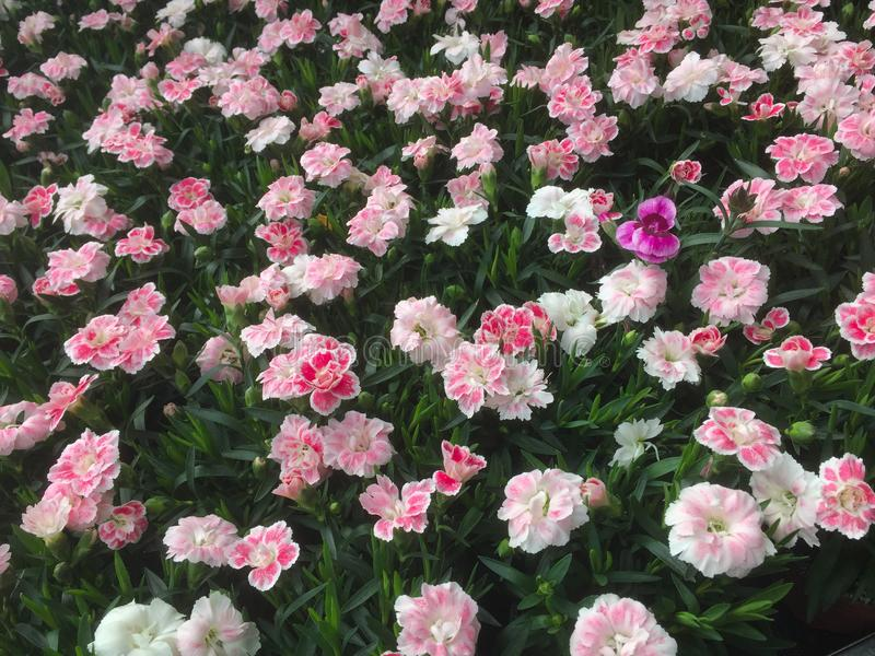 Buntes Feld der Blumen stockfotografie