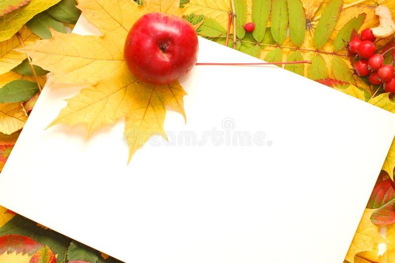 Buntes Feld der gefallenen Herbstblätter lizenzfreies stockfoto