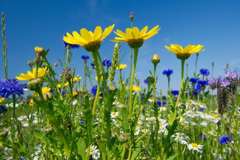 Buntes Feld mit Blumen lizenzfreie stockbilder
