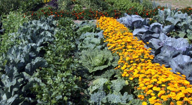 Buntes Gemüsegartenbett stockfotos