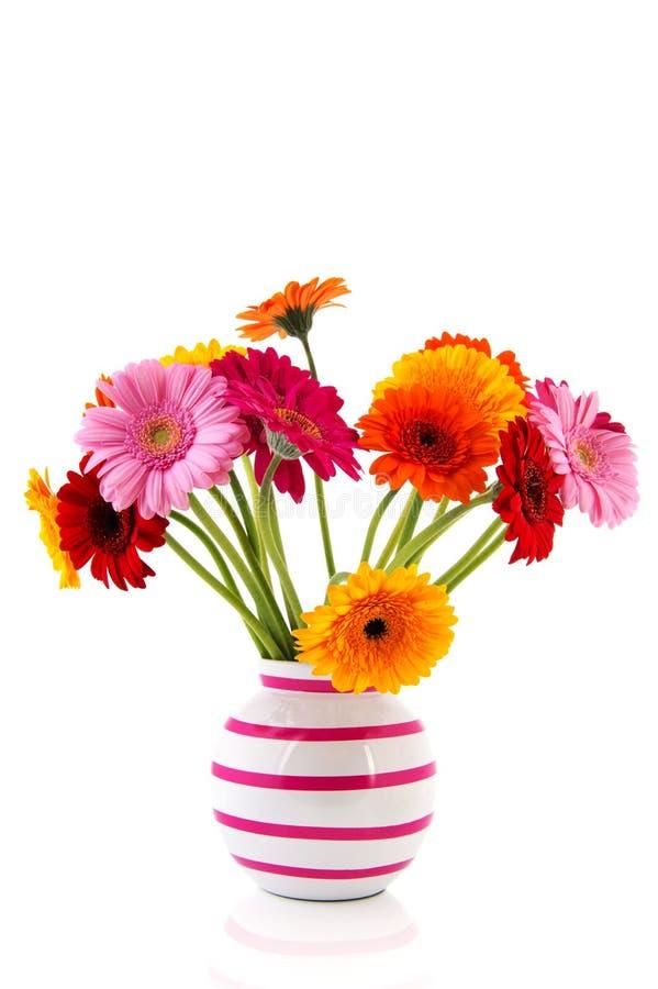 Buntes Gerber im Vase lizenzfreies stockbild