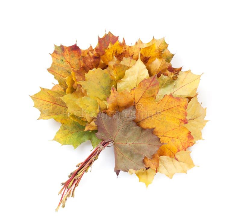 Buntes Herbstahornblattbündel lizenzfreie stockfotos