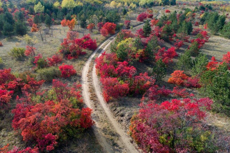 Buntes Herbstwaldtrieb vom Brummen stockbild