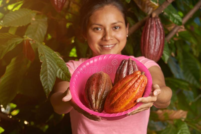 Buntes Kakaobauernhofthema lizenzfreie stockfotografie