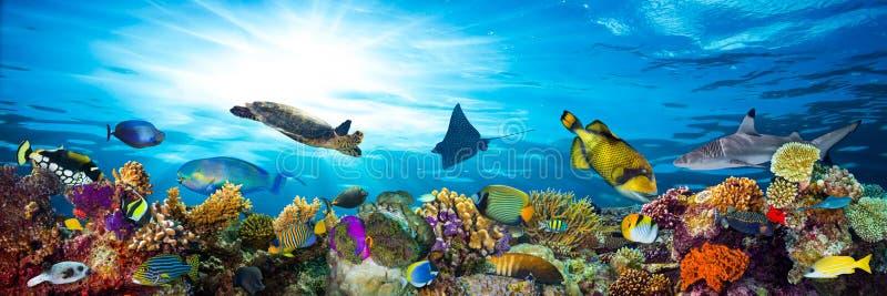 Buntes Korallenriff mit vielen Fischen stockfotografie
