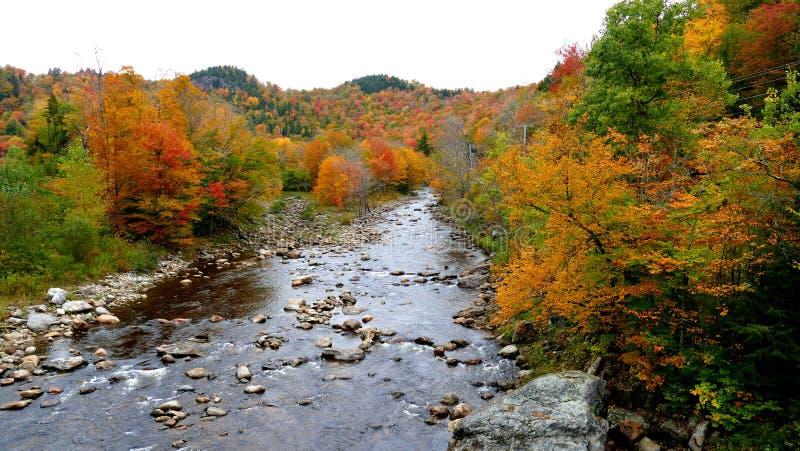 Buntes Laub des Herbstes über Fluss mit schönen Bäumen in der roten und gelben Farbe stockfotografie