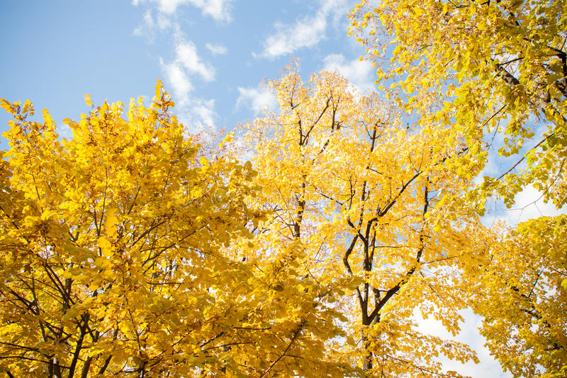 Buntes Laub im Herbstpark Herbstlaub-Himmel backgroun stockbild