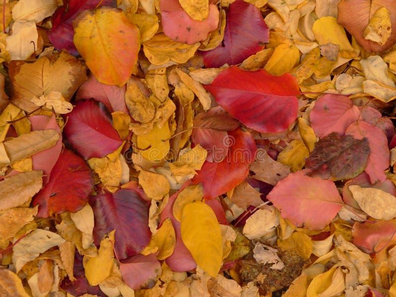 Buntes Muster des gefallenen Herbstlaubs stockfotografie