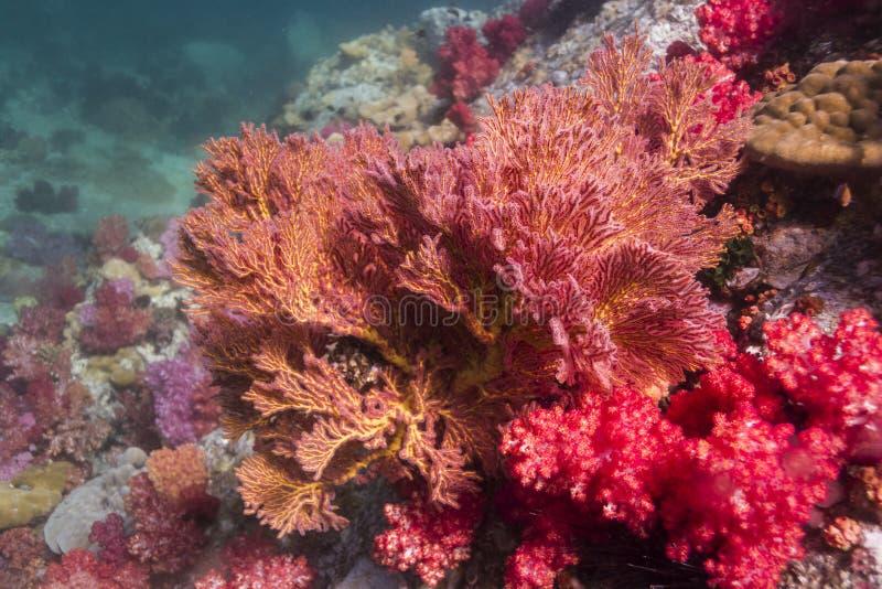 Buntes seafan in Lipe Insel lizenzfreie stockfotografie