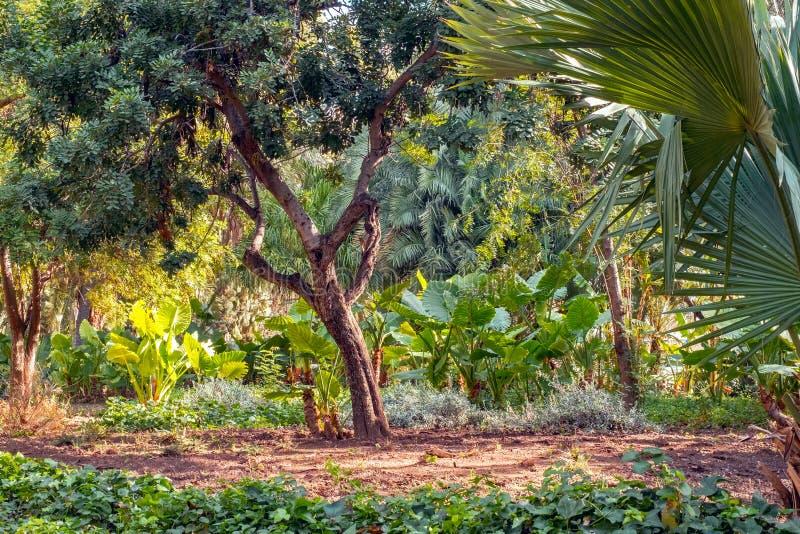 Buntes und exotisches Szene frome Màlaga-Zentrale-parque lizenzfreie stockfotografie