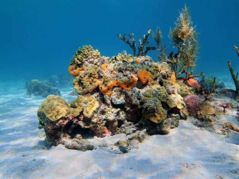 Buntes Unterwassermeeresflora und -fauna stockfotos