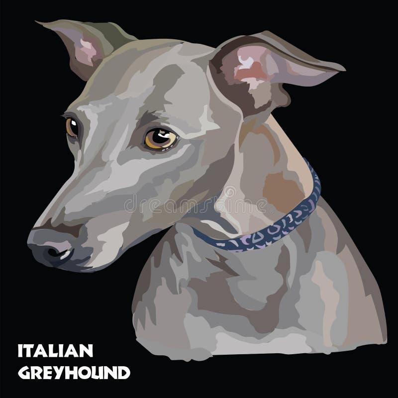 Buntes Vektorporträt des italienischen Windhunds lizenzfreie abbildung