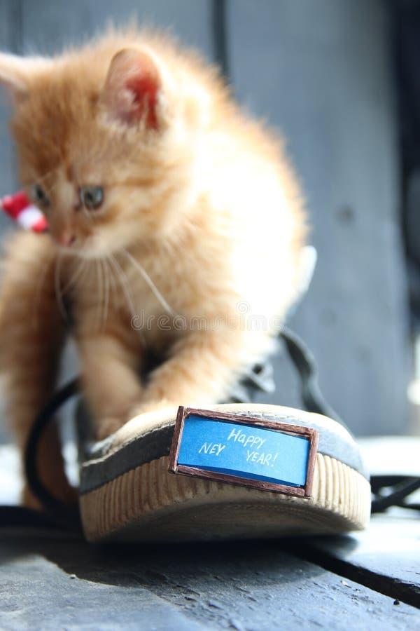 Buon anno - iscrizione e una scarpa con il gattino immagine stock