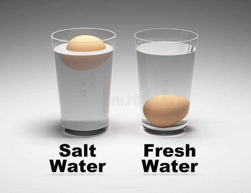 Buoncy experiment. Egg testing in pure and salt water. vector illustration