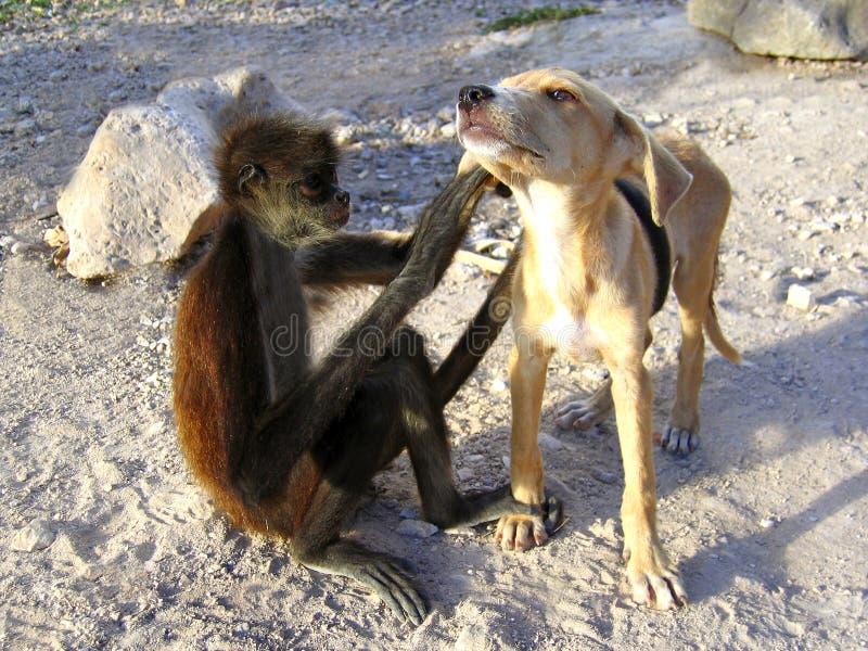 Buoni amici del cane e della scimmia immagine stock