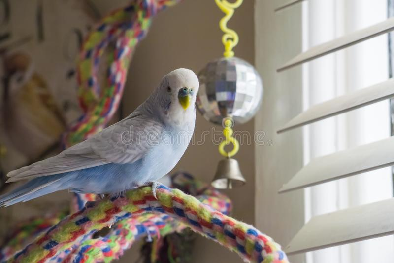 Buono blu e bianco seduto sul perno della fune fotografia stock