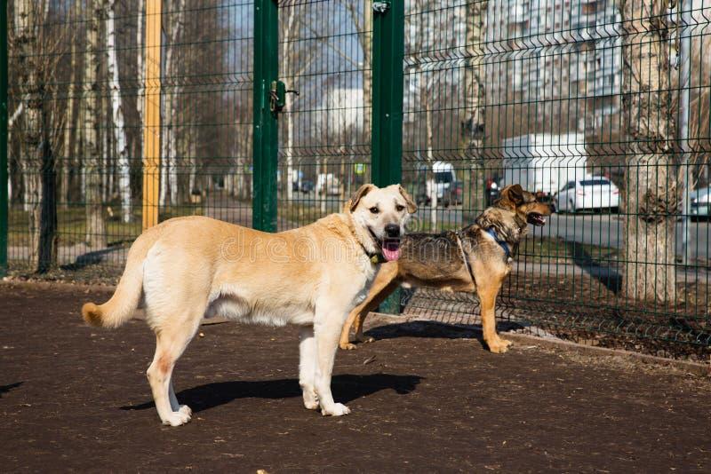 Bur för hundkapplöpning i djurt skydd royaltyfri fotografi