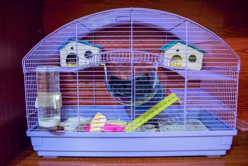 Bur för små husdjur arkivbilder