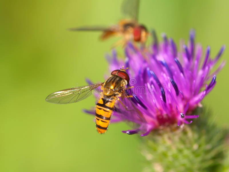 Bur thorny flower with bee.