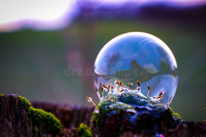 Burbuja de jabón en el verde imagen de archivo