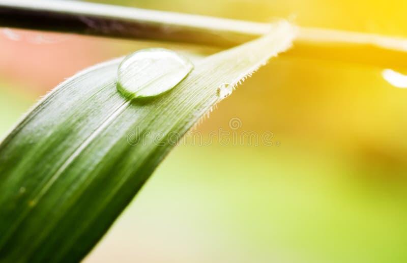 Burbuja macra en hierba verde en la naturaleza borrosa foto de archivo