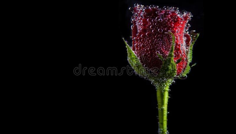 Burbujas de Rose imágenes de archivo libres de regalías