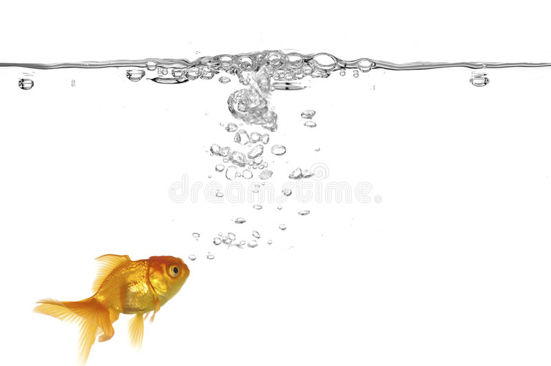 Burbujas del Goldfish y de aire fotografía de archivo