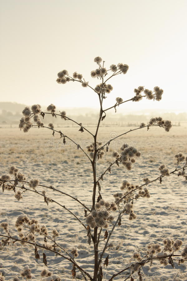 Download Burdock in haze stock image. Image of snowy, dawning - 12018961