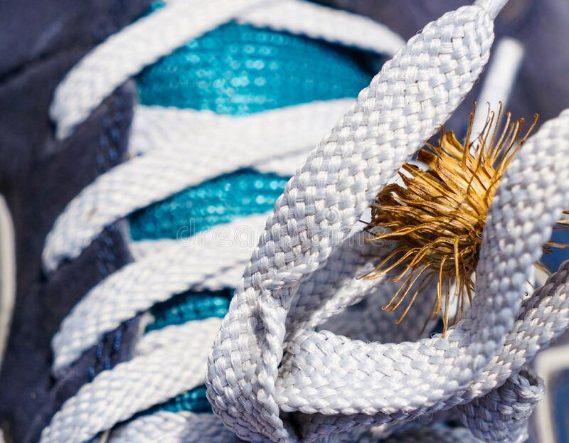 Burdock hooked on laces. Spike on sneakers closeup royalty free stock images