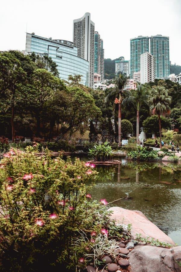 Bureaugebouwen achter het groen van het Hong Kong-park worden verborgen dat stock foto's