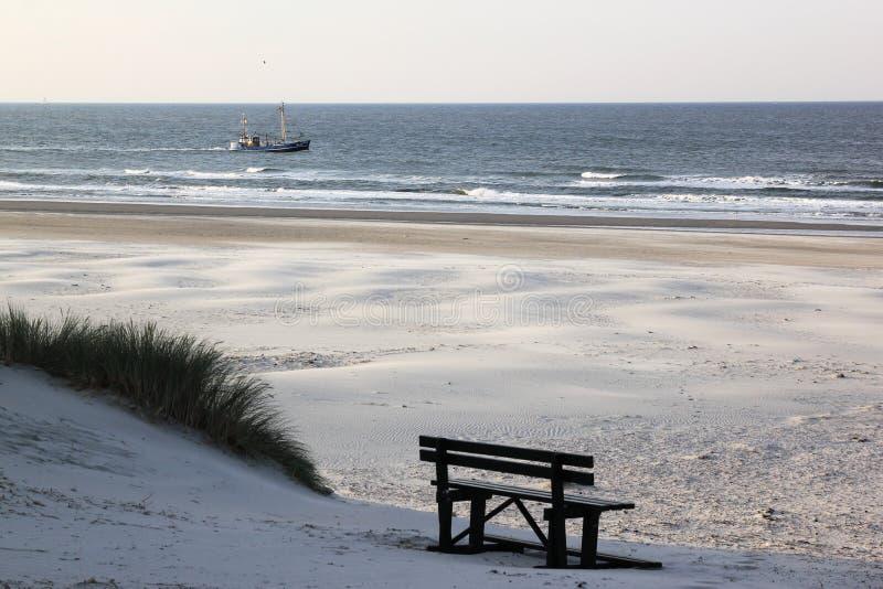 Bureblinkert at Ameland Beach, Holland royalty free stock photos