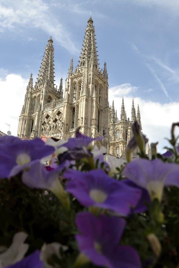 Burgos domkyrka bak violetta blommor, Spanien arkivfoton