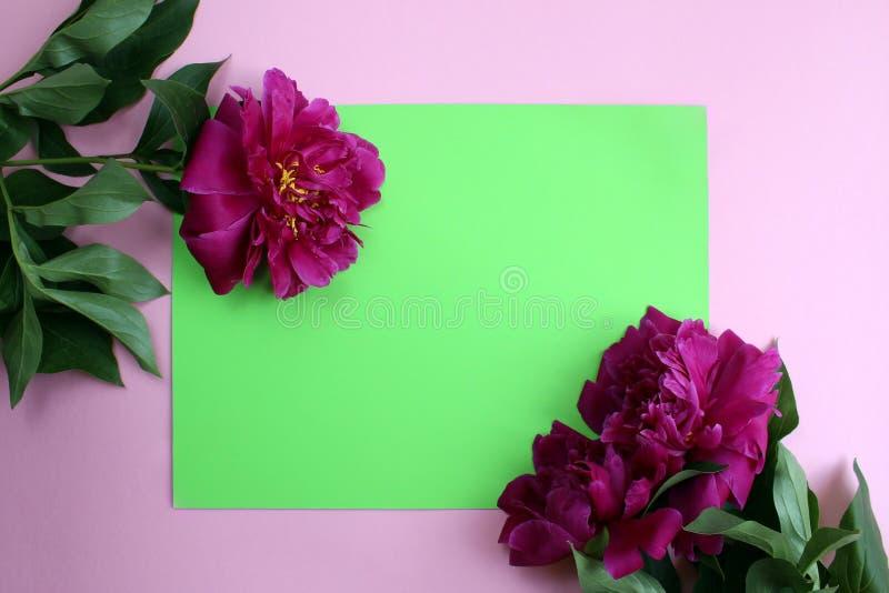 Burgunder-Blumen einer schönen üppigen Pfingstrosenlüge auf einem grünen Hintergrund lizenzfreie stockfotos