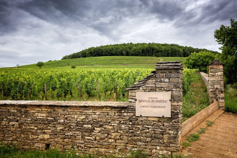 burgunder Corton-Karl der Große ist die großartige Cru-Benennung für die Weißweine des Hügels Montagne de Corton, Frankreich lizenzfreies stockfoto