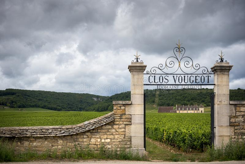Burgundy, Clos de Vougeot. France. Present on an area of about 50 hectares, Clos de Vougeot is a Grand Cru appellation. Burgundy, Clos de Vougeot. Even though royalty free stock photography
