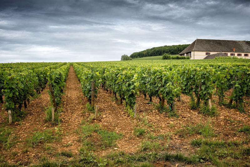 Burgundy, many chateau castle are surrounded by many acres of vineyards and are great wine producers. France. BURGUNDY - CORTON: scenic road that crosses the stock photography